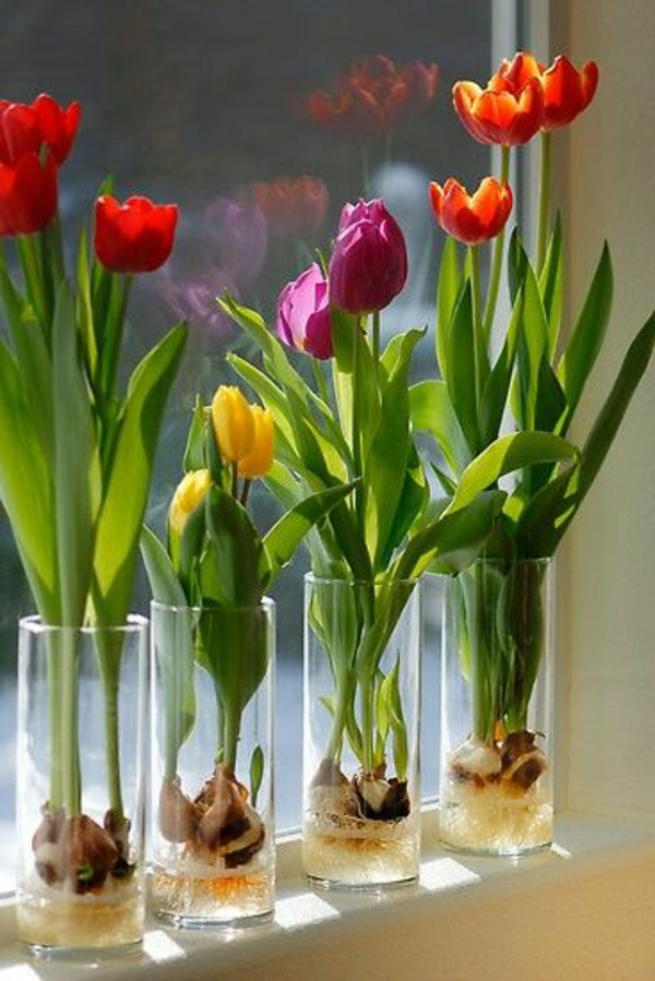 windowsill decorating ideas flowers tulips