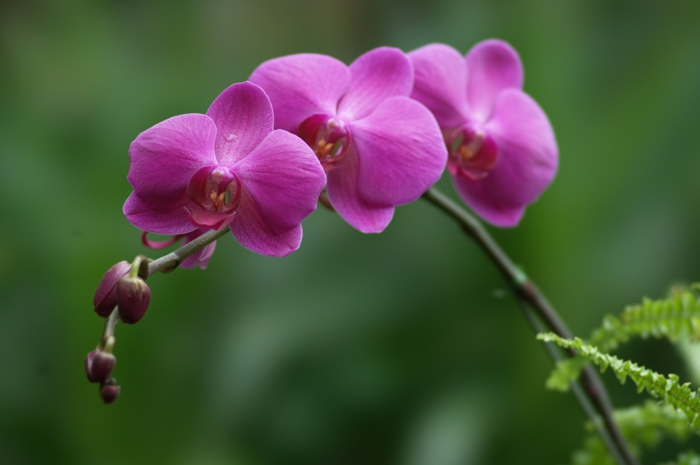 Orchids cultivate purple flowers of different kinds