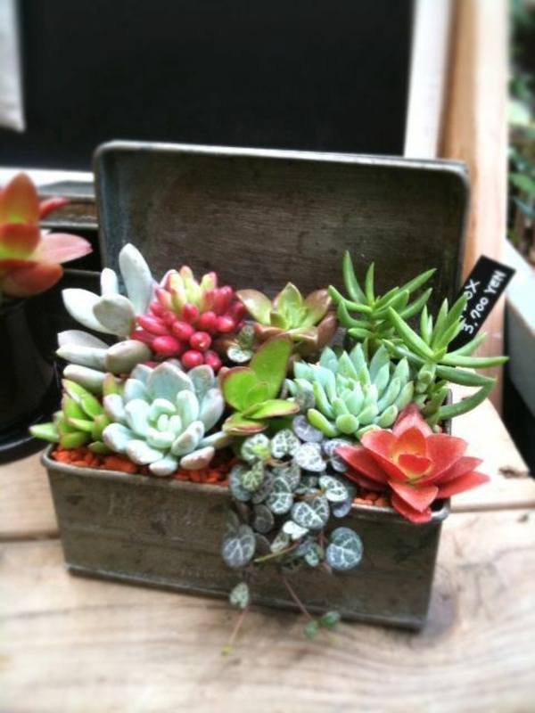 easy-care indoor plants pictures potted plants succulents wooden box