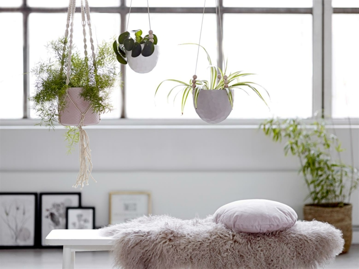 easy-care indoor plants pictures hanging plants