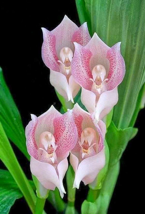 Orchids angels orchid beautiful deco ideas