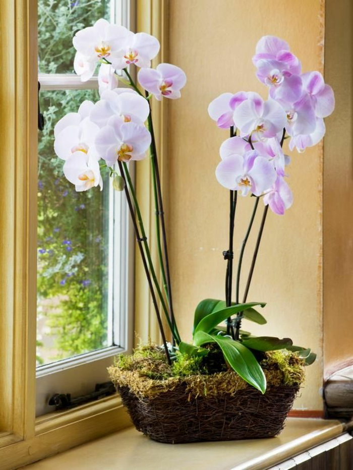 orchids care tips window light