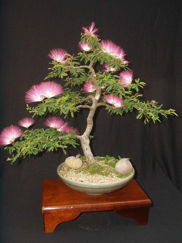 bonsai tree leaves flowers garden landscaping