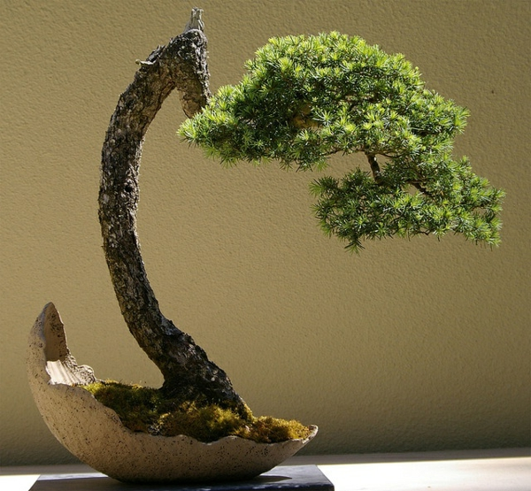 bonsai plant failed garden plant