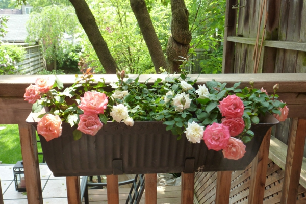 flower box balcony beautiful living room exterior roses