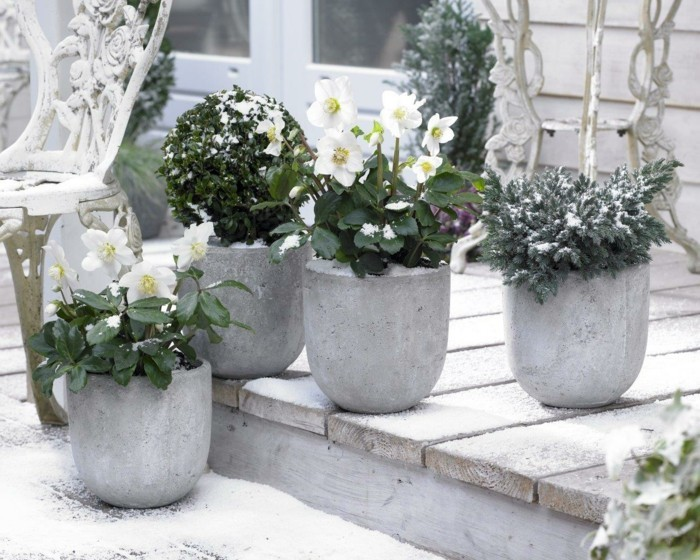 potted plants plant care garden plants hardy