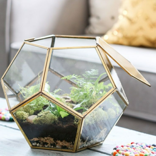 terrarium plants glass vessels irregularly