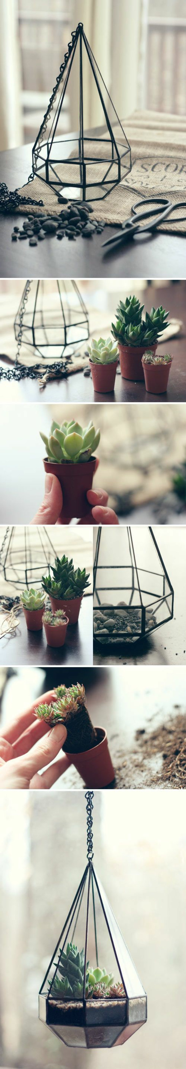 terrarium plants terrarium itself build deco ideas