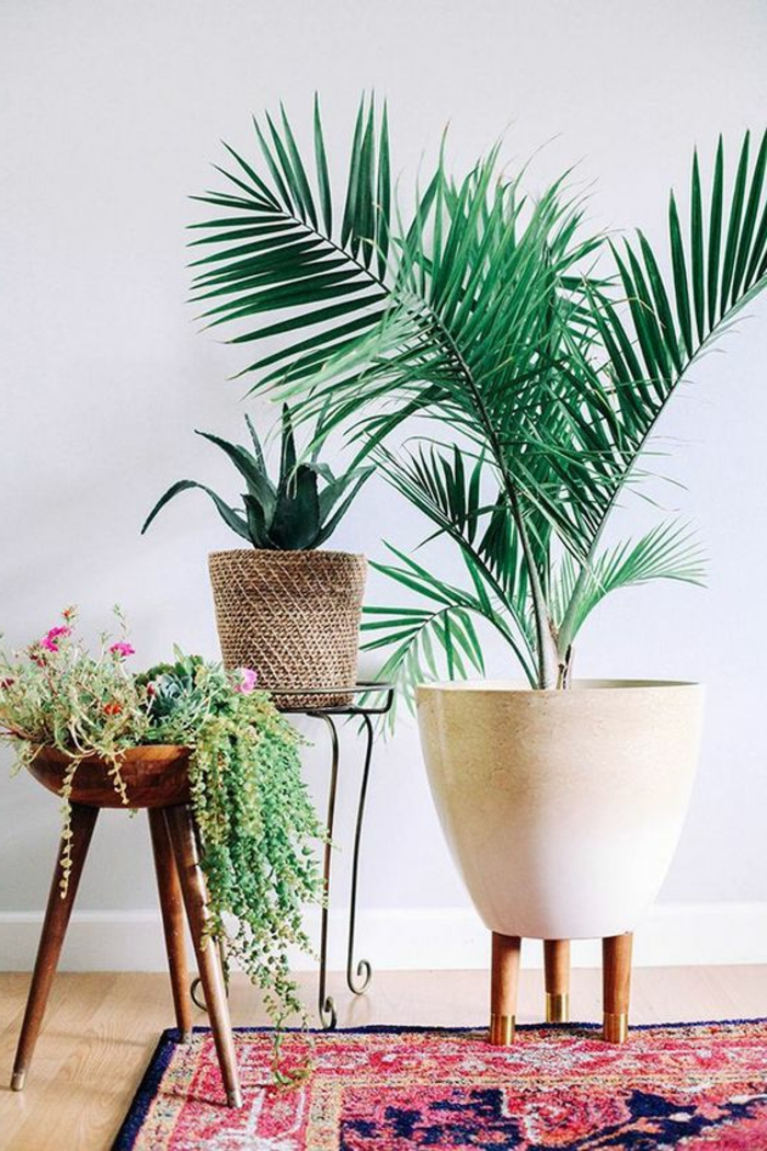 indoor plants potted plants deco ideas