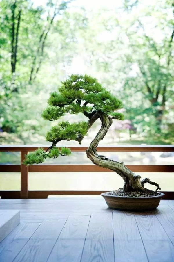 bonsai tree bonsai care landscaping