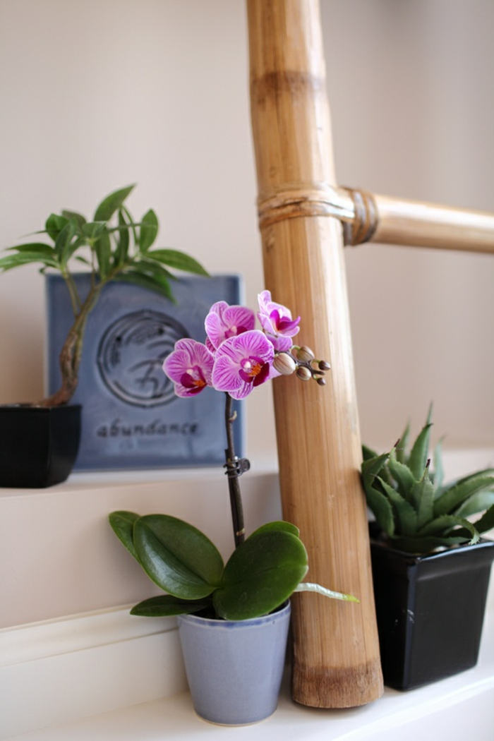 orchids maintain light water worth knowing