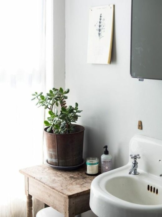 succulents-than-decoration-to-home-money tree-in-bathroom