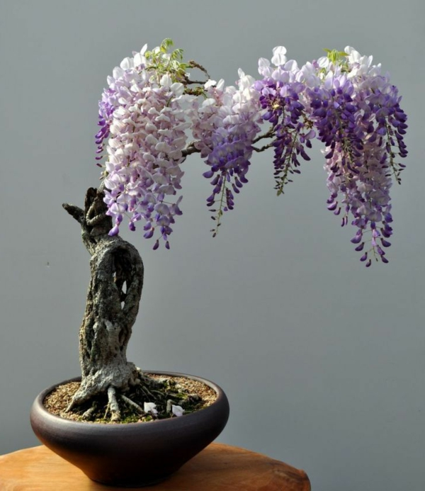 plant mini bonsai tree beautiful decoration