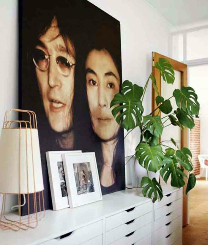 easy-care indoor plants pictures wall decoration ideas