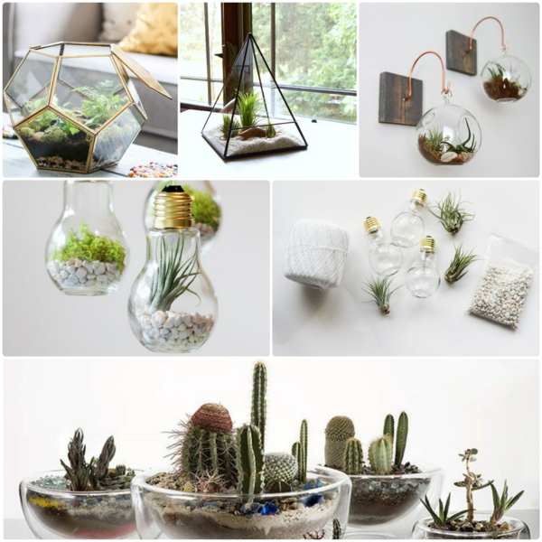 terrarium plants glass vessels stone moss deco craft ideas