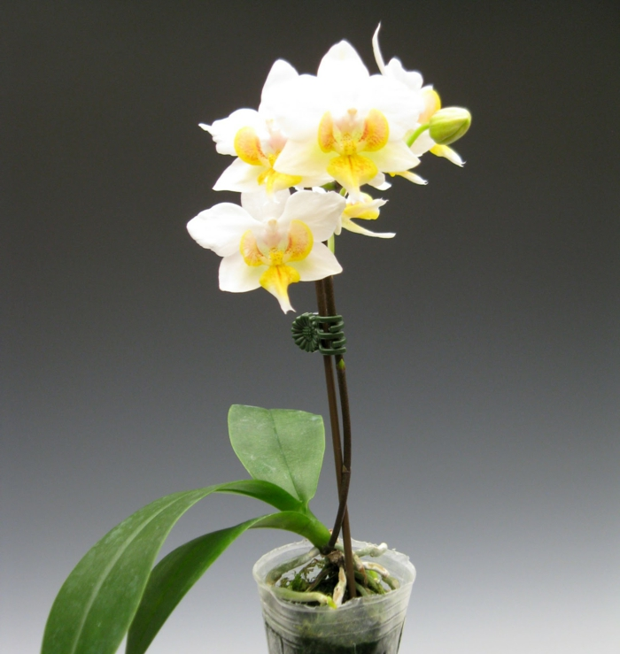 orchid care home tips orchids types
