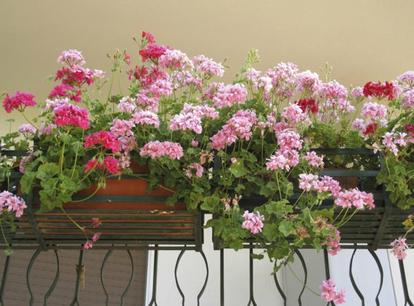 balcony garden flowers flower box exterieur