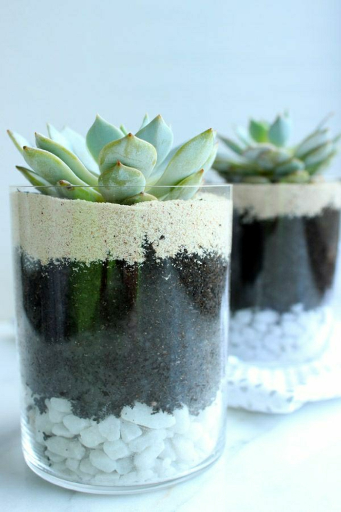 easy care indoor plants pictures glass stones succulents