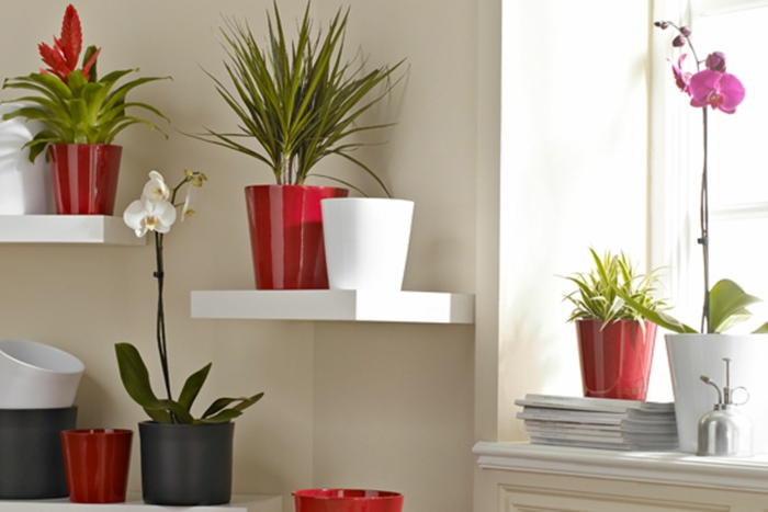easy-care house plants pictures plant pots red white