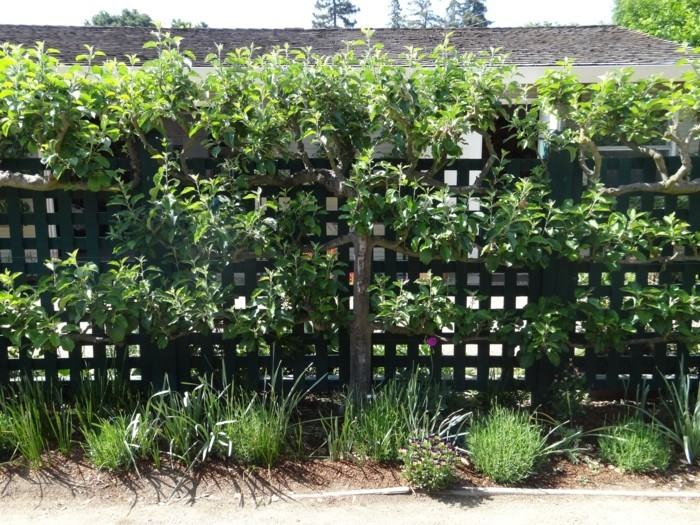 trellis in the garden as decoration and privacy
