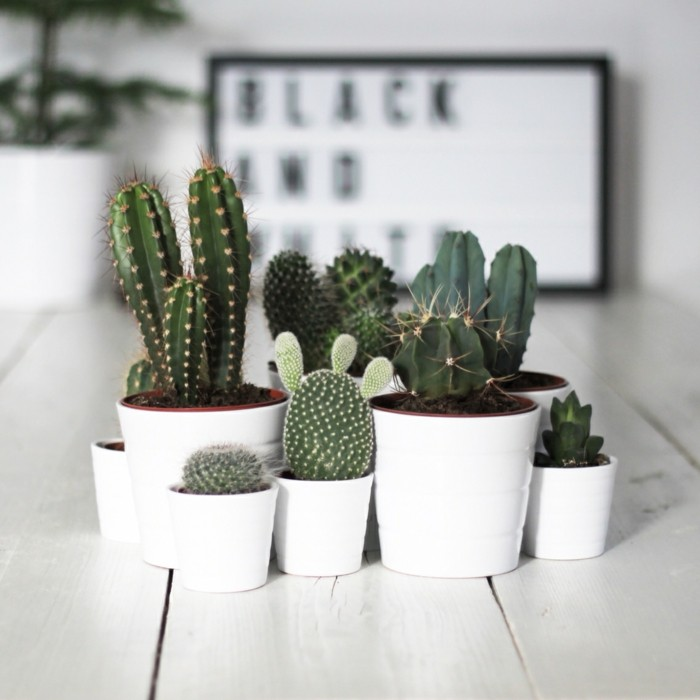 succulent deco cacti living decoration ideas