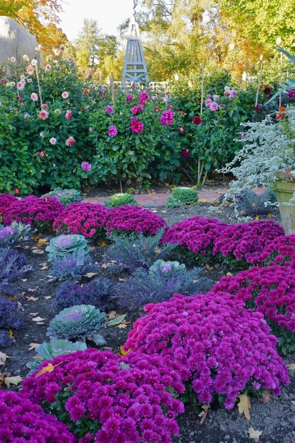gardening pictures purple floral planting