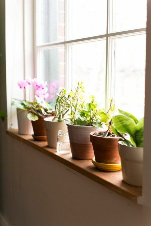 Beautiful home decorating planting windowsill