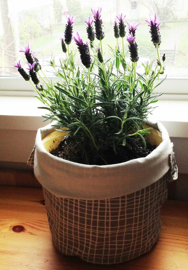 easy-care indoor plants pictures potted plants lavender zimerpflanzen easy-care