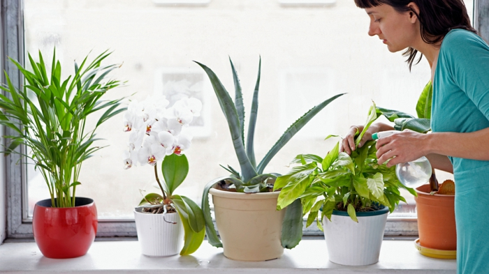indoor plants potted plants properly maintain decoration ideas