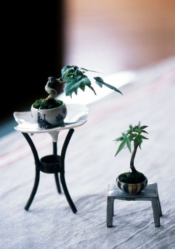 mini bonsai tree unusual decoration plants