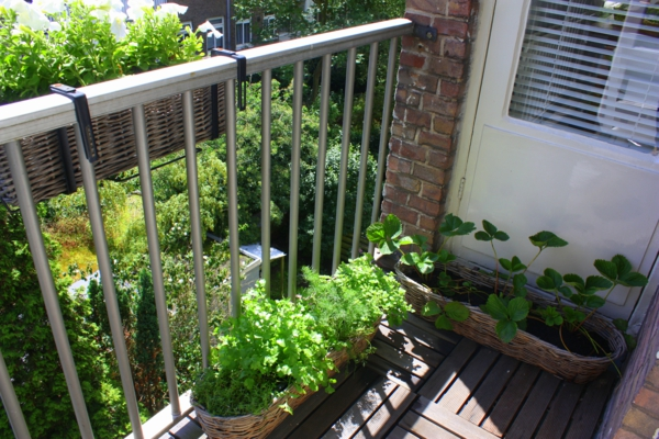 terrace design ideas vegetables grow bio garden