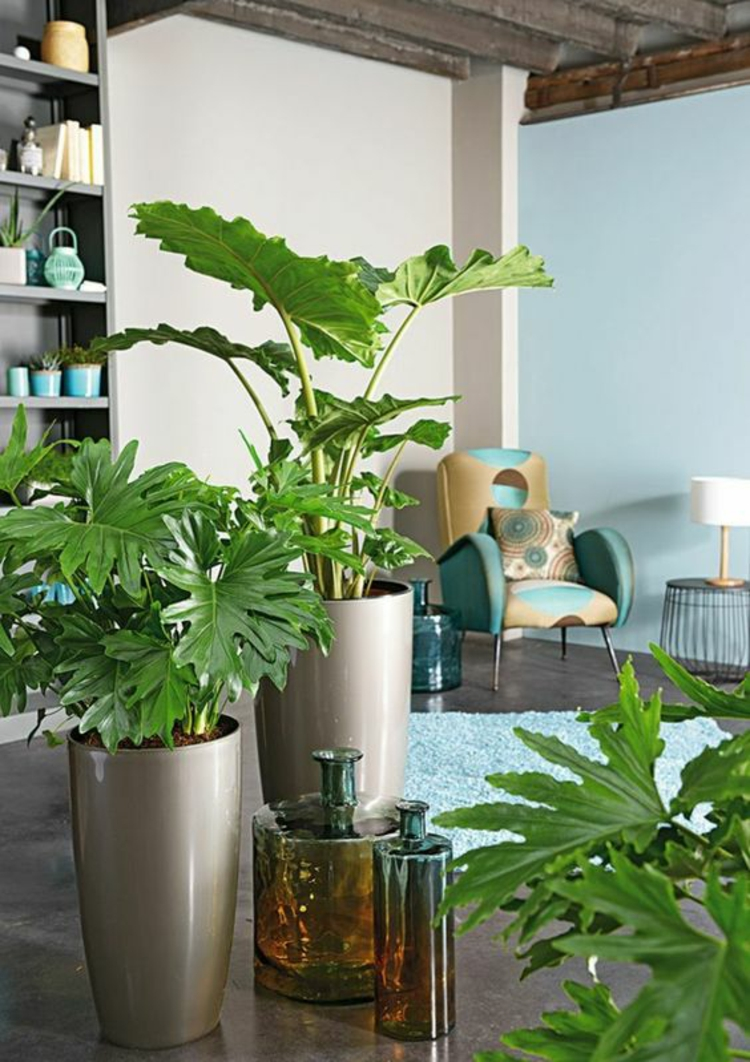Feng Shui pictures indoor plants positive energy