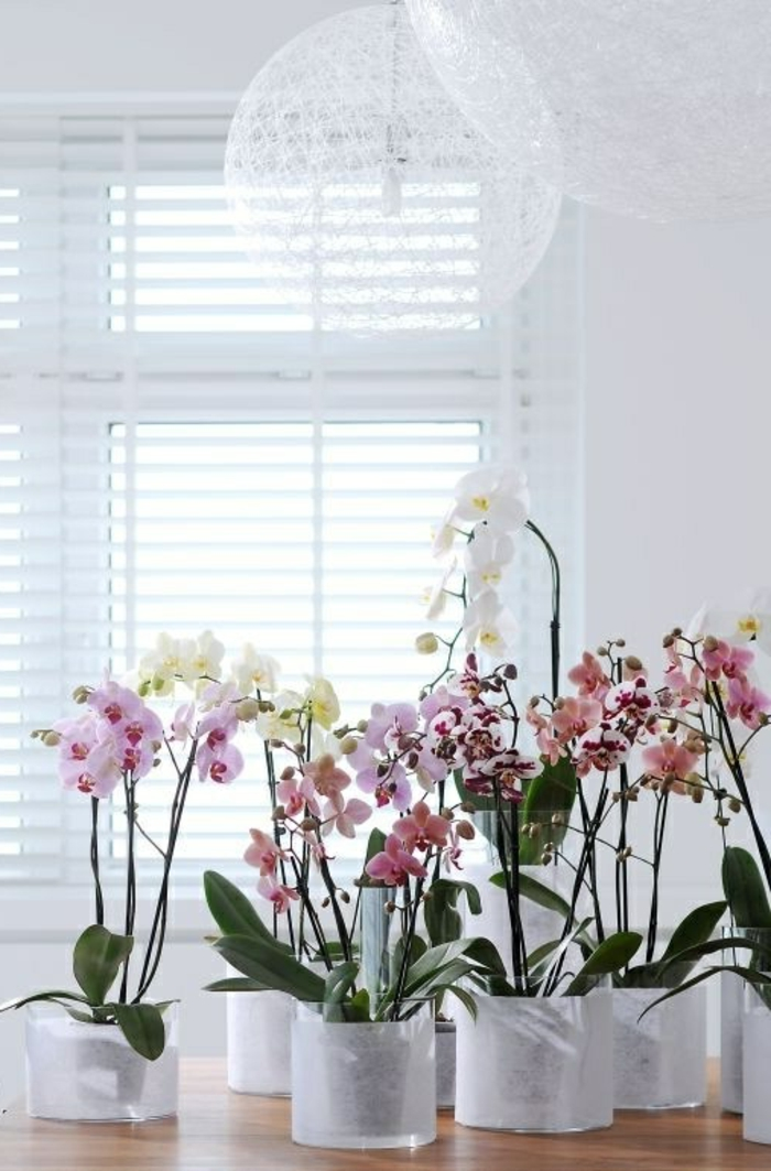 orchid care different colors indoor plants