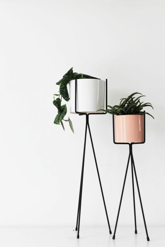 Use easy-care indoor plants as decorative items