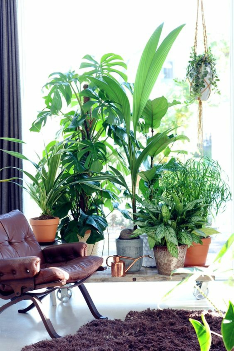 Feng Shui pictures indoor plants terrace design positive energy