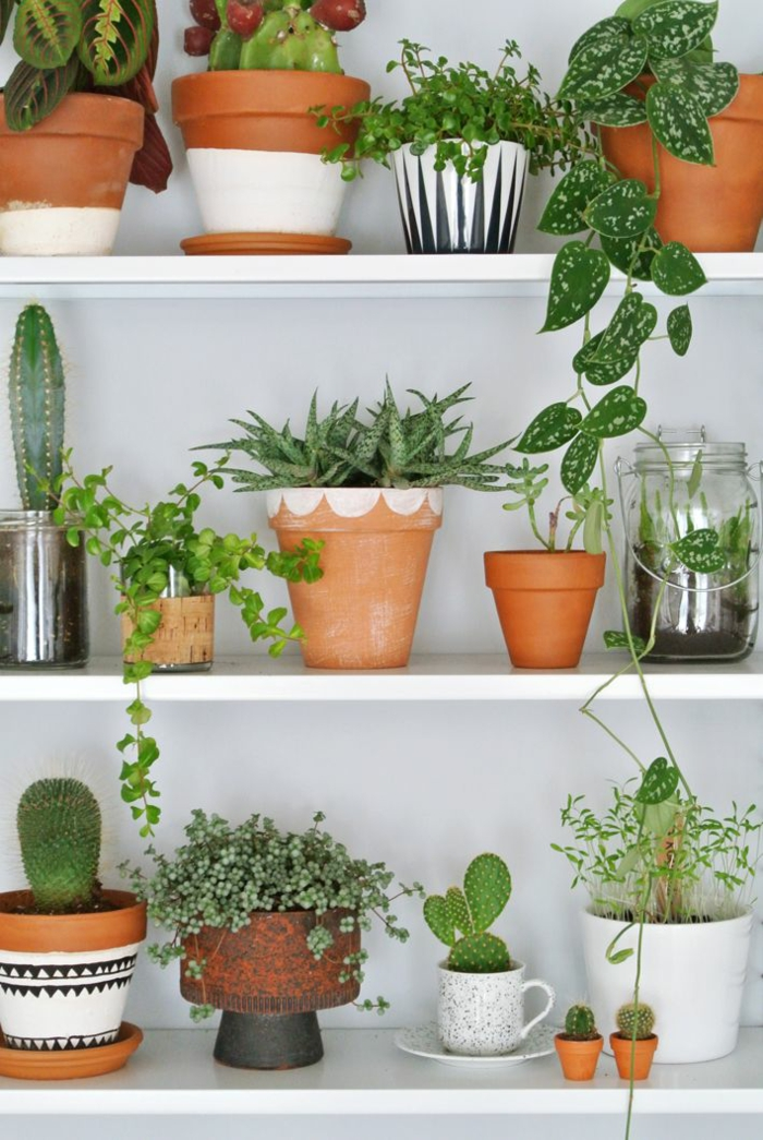 easy-care indoor plants pictures Wall shelf with potted plants