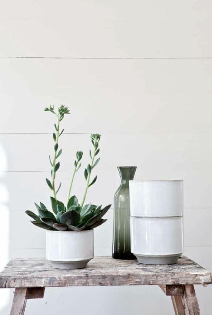 beautiful houseplants easy to care for sturdy potted plants