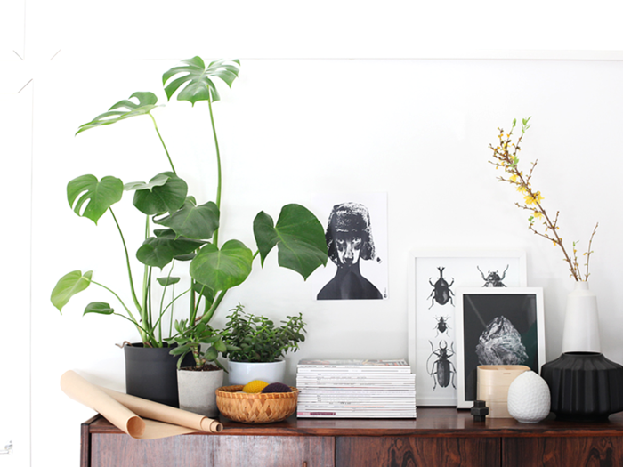 easy-care indoor plants images Geldbaum potted plant