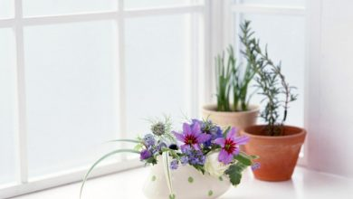 Photo of Window Sill Deco – bringing the colors of nature home with plants