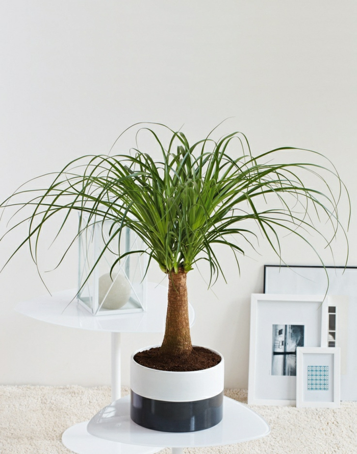 feng shui elements asian style of living room palms