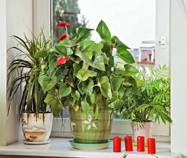 potted plant flamingo flower flowering plants indoor plants easy to clean
