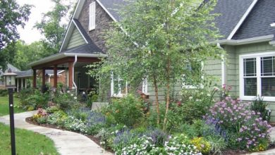 Photo of Find the right house tree for your own garden