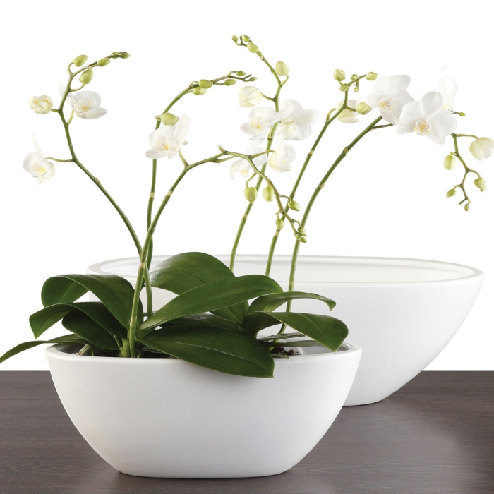 orchid care white flowerpot indoor plants