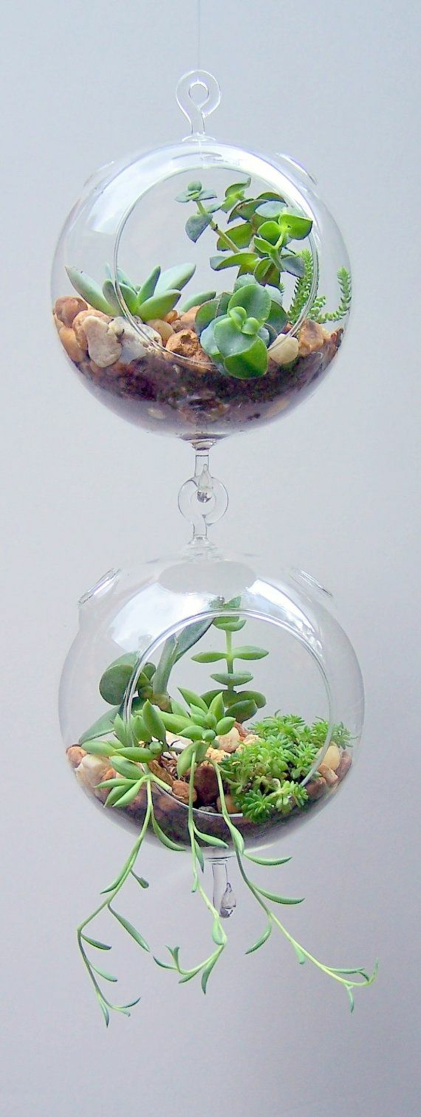 terrarium plants hanging glass tubes round