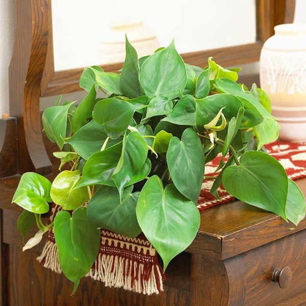 indoor plants easy care pictures potted plants tree friend