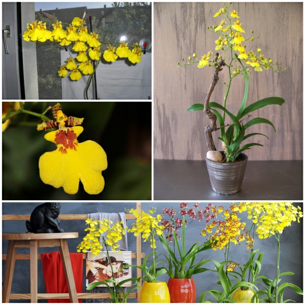 beautiful indoor plants potted plants indoor plants pictures
