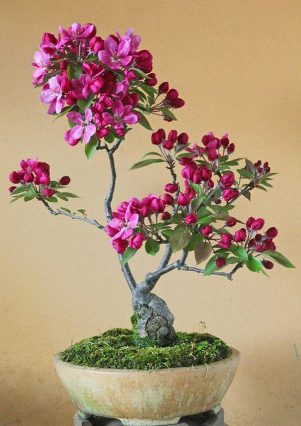 mini bonsai tree pink flowers