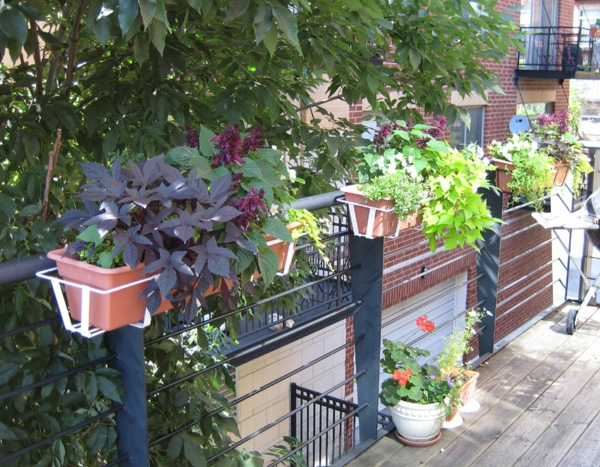 flower box balcony plant beautiful living ideas