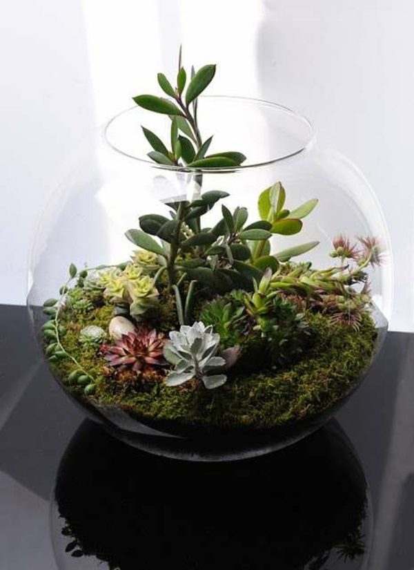 terrarium plants moss glass vessel terrarium itself build indoor plants