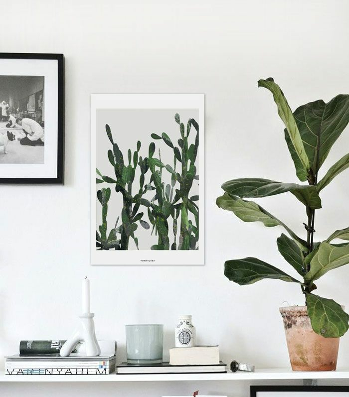 beautiful houseplants easy to decorate white walls